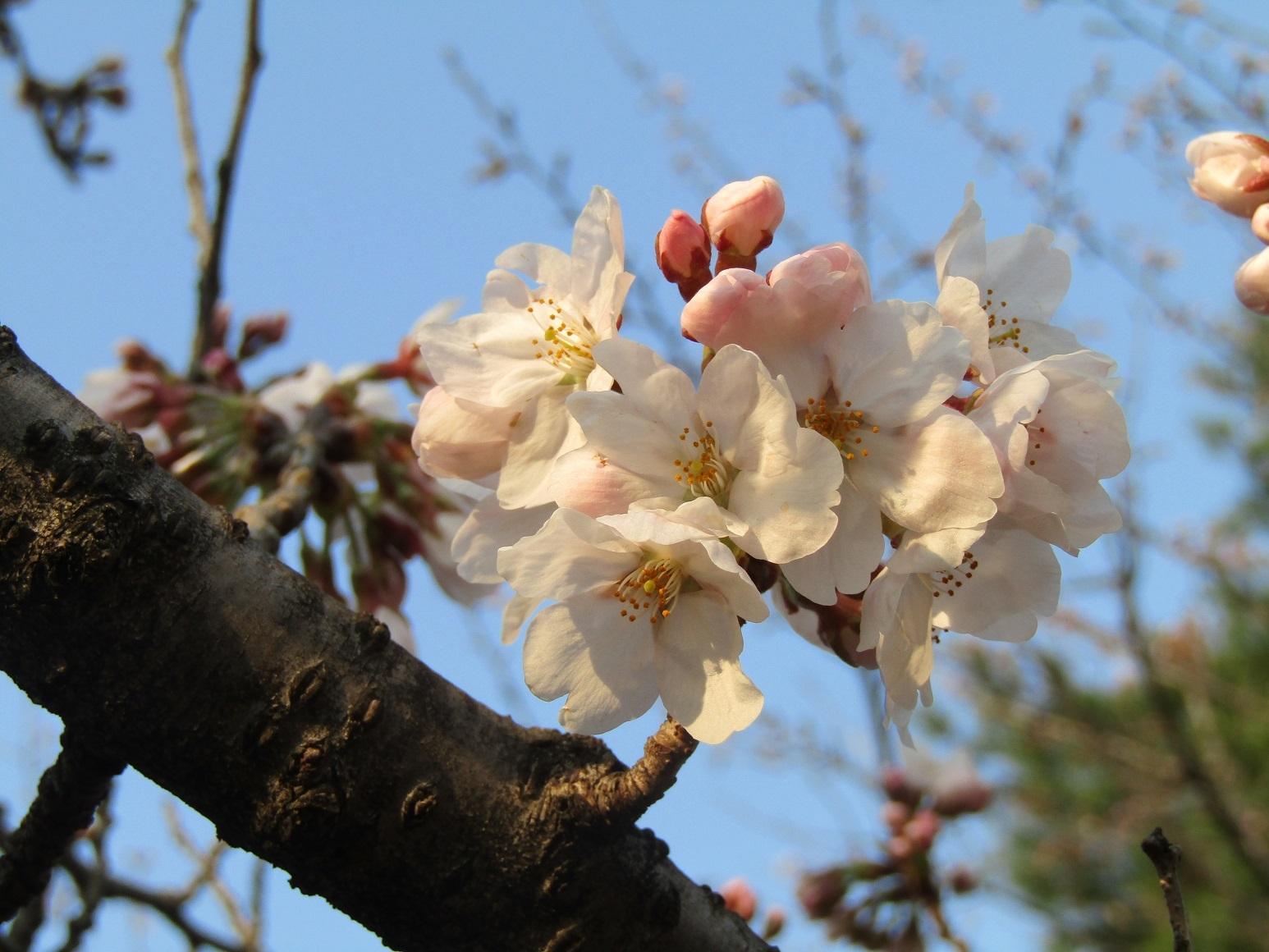 神通峡に訪れし春。_f0281398_21275442.jpg