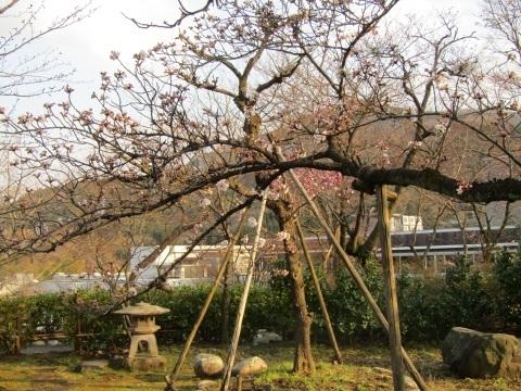 神通峡に訪れし春。_f0281398_21292869.jpg
