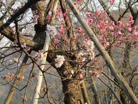 神通峡に訪れし春。_f0281398_21294469.jpg