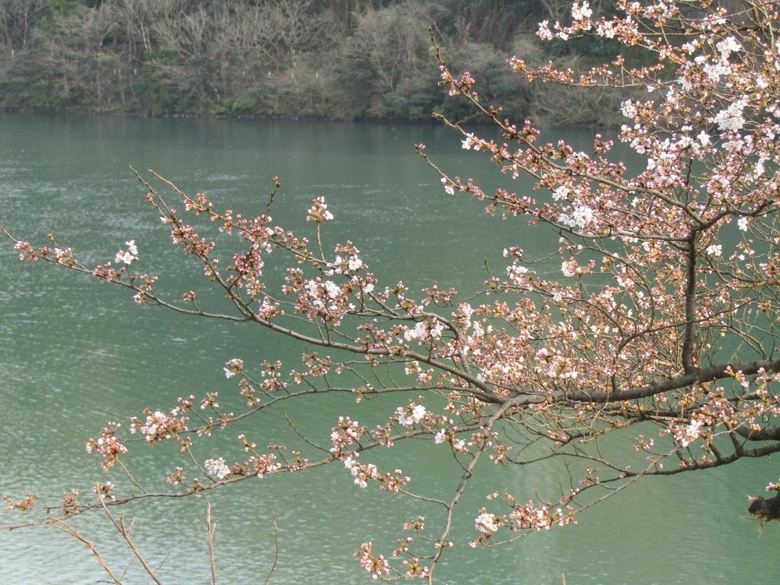神通峡に訪れし春。_f0281398_21303783.jpg