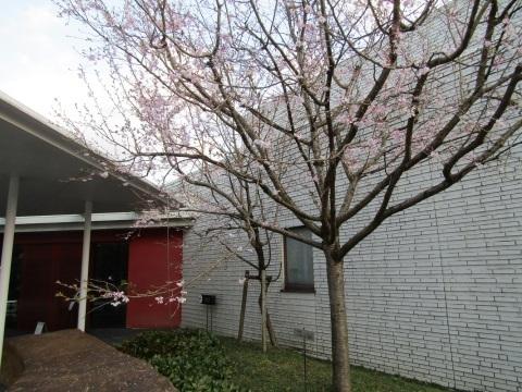 神通峡に訪れし春。_f0281398_21314675.jpg