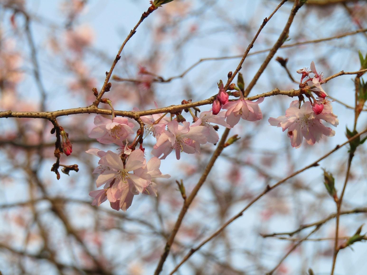 神通峡に訪れし春。_f0281398_21320285.jpg