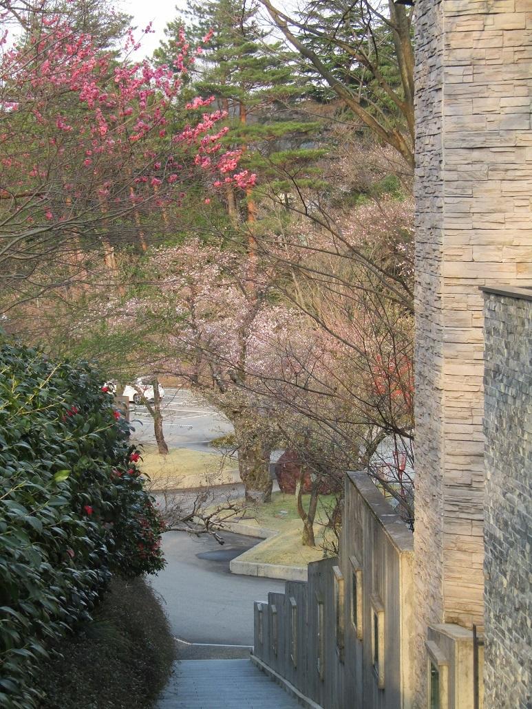 神通峡に訪れし春。_f0281398_21322130.jpg
