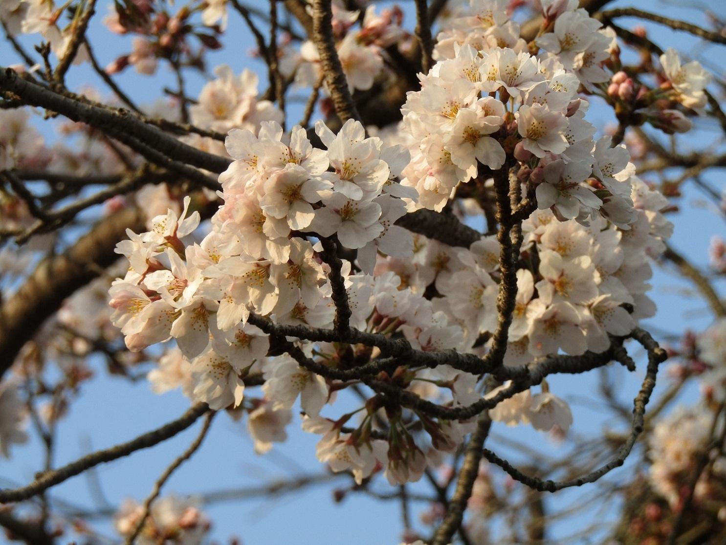 神通峡に訪れし春。_f0281398_21325887.jpg