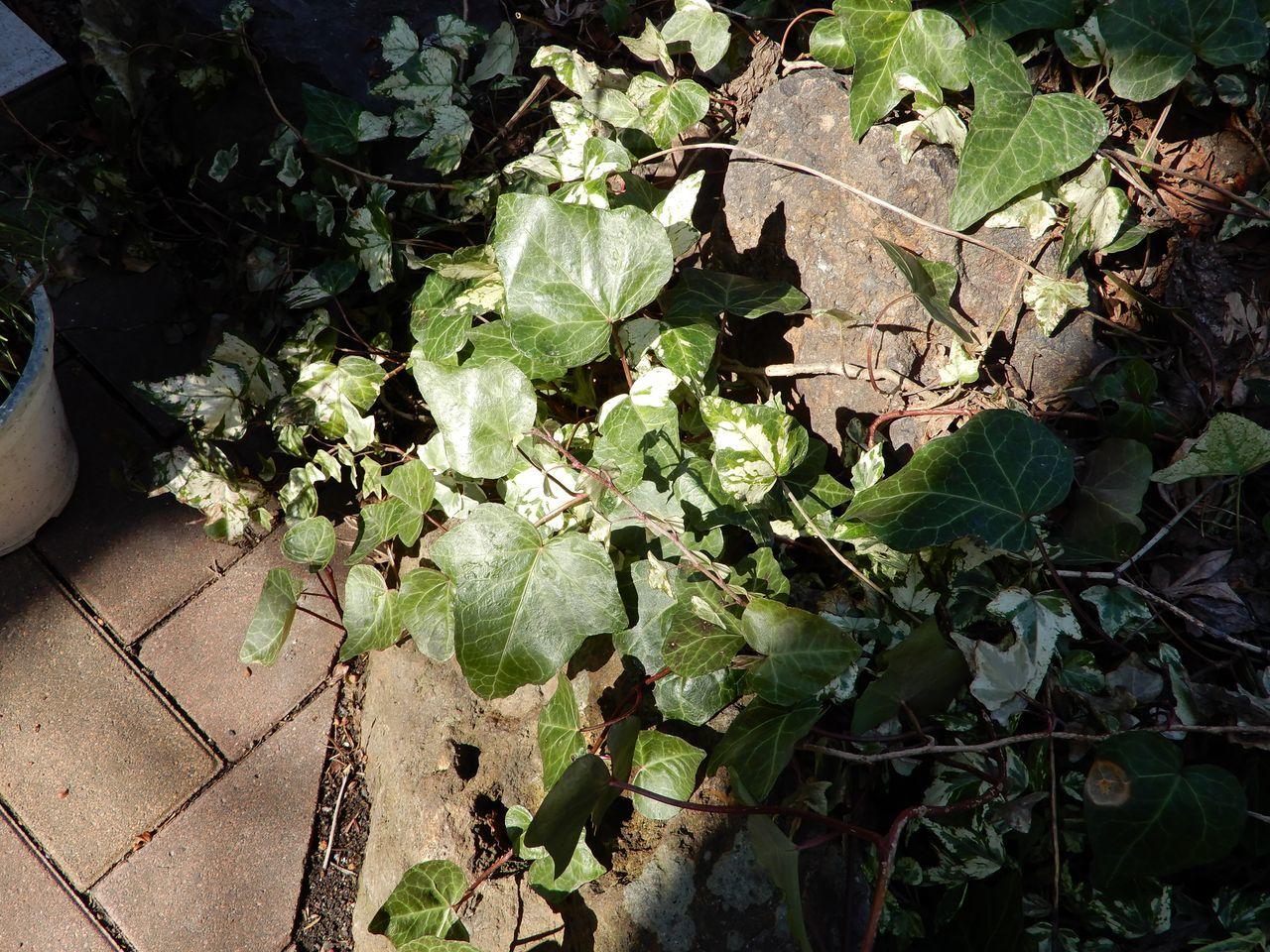 我が家の庭でのこの春最初の開花_c0025115_21174764.jpg
