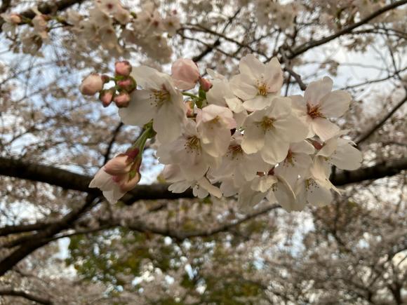 変わらず花は咲く。_a0098418_09040253.jpg
