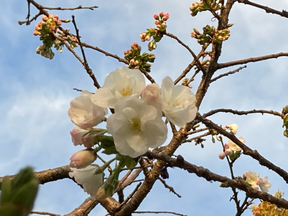 変わらず花は咲く。_a0098418_09041015.jpg