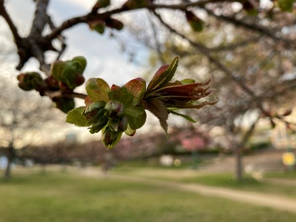 変わらず花は咲く。_a0098418_09053555.jpg