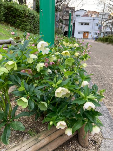 変わらず花は咲く。_a0098418_09054762.jpg