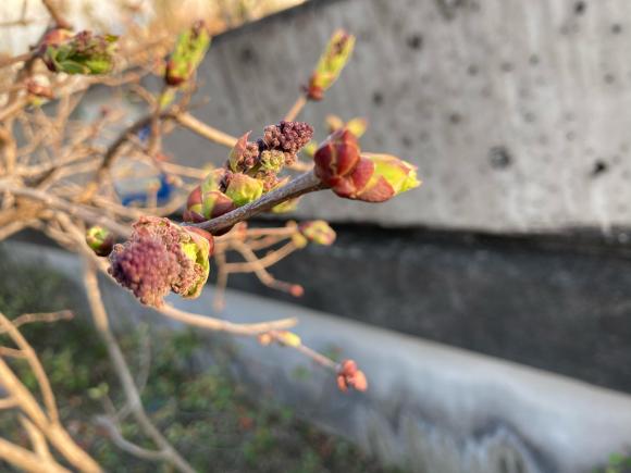 変わらず花は咲く。_a0098418_09083776.jpg