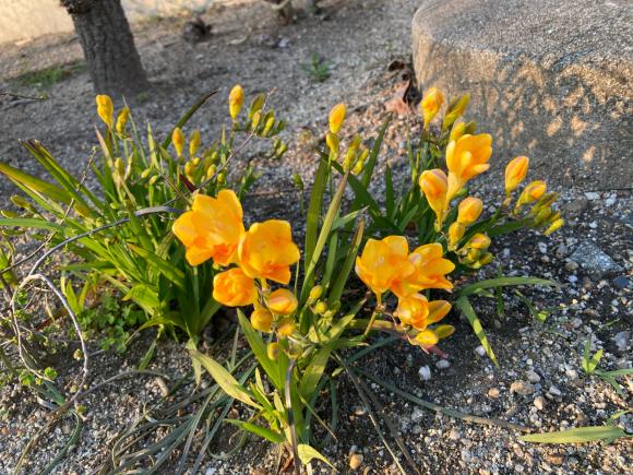 変わらず花は咲く。_a0098418_09085438.jpg