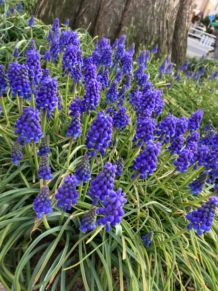 変わらず花は咲く。_a0098418_09085974.jpg