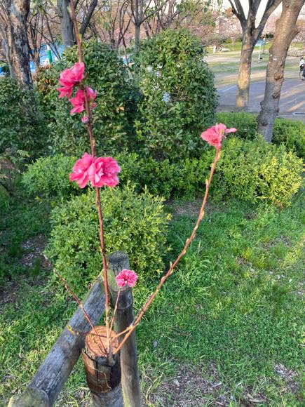 変わらず花は咲く。_a0098418_09143048.jpg