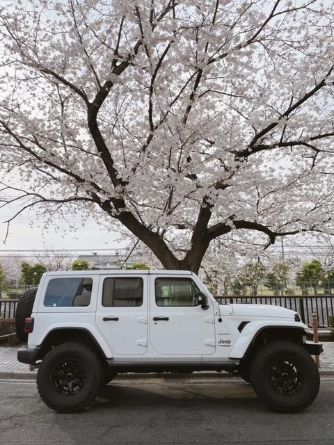 桜とJeep ラングラー_b0123820_16524921.jpg