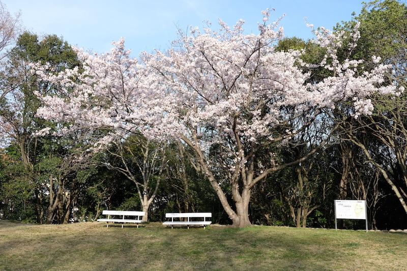 桜(垂水 神戸)_b0279441_17090437.jpg