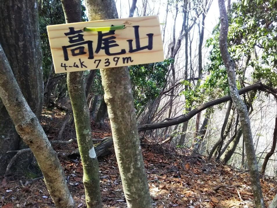 鬼ヶ島・マザーツリー_c0218841_21371362.jpg