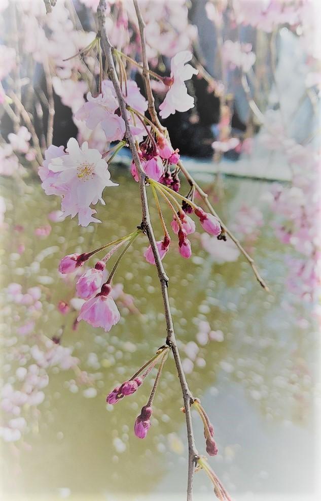春めいて_c0157242_14002732.jpg