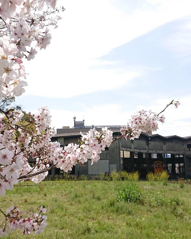 桜と緑 親しむ会_c0172049_14545120.jpg