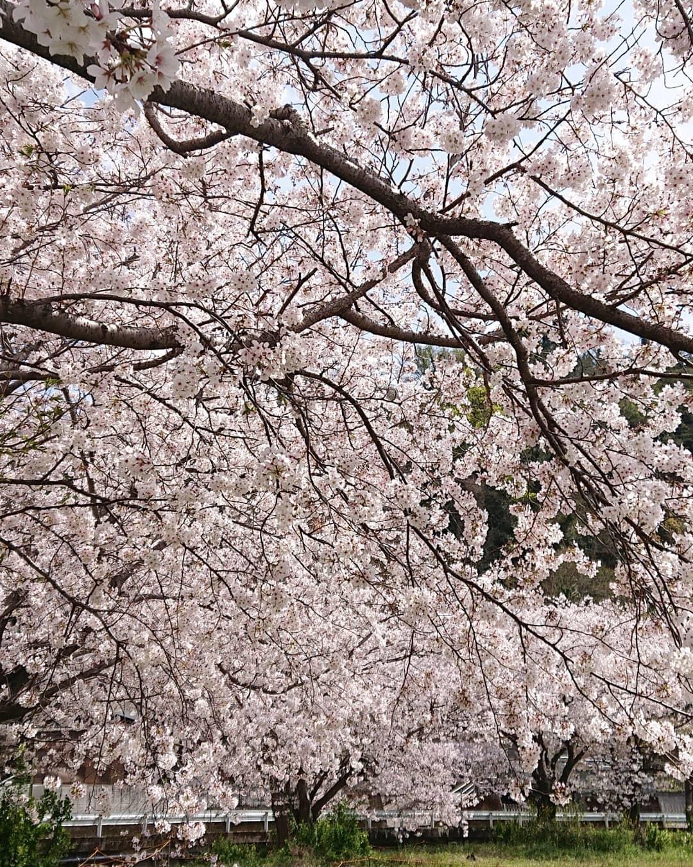 桜と緑 親しむ会_c0172049_14550177.jpg