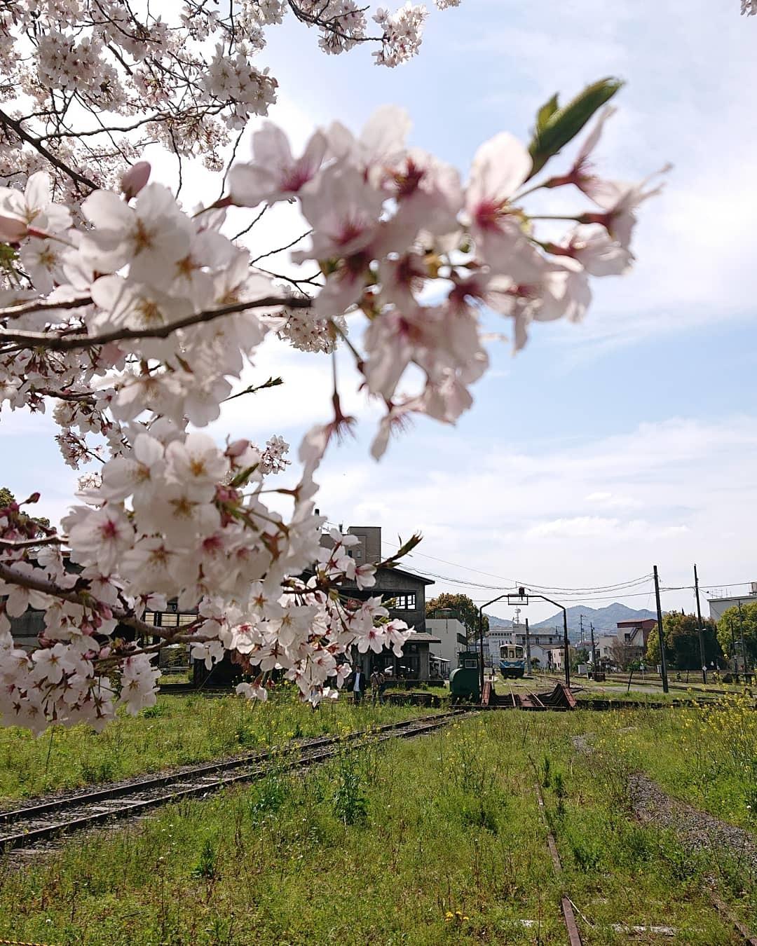 桜と緑 親しむ会_c0172049_14551213.jpg