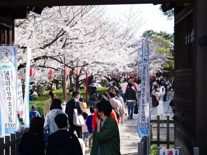 桜満開の和歌山城へ  2021-03-28 00:00 _b0093754_23244846.jpg