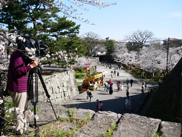 桜満開の和歌山城へ  2021-03-28 00:00 _b0093754_23250850.jpg