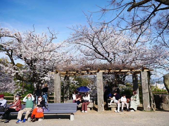 桜満開の和歌山城へ  2021-03-28 00:00 _b0093754_23252975.jpg