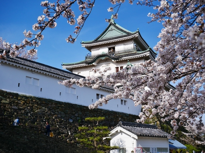 桜満開の和歌山城へ  2021-03-28 00:00 _b0093754_23255975.jpg