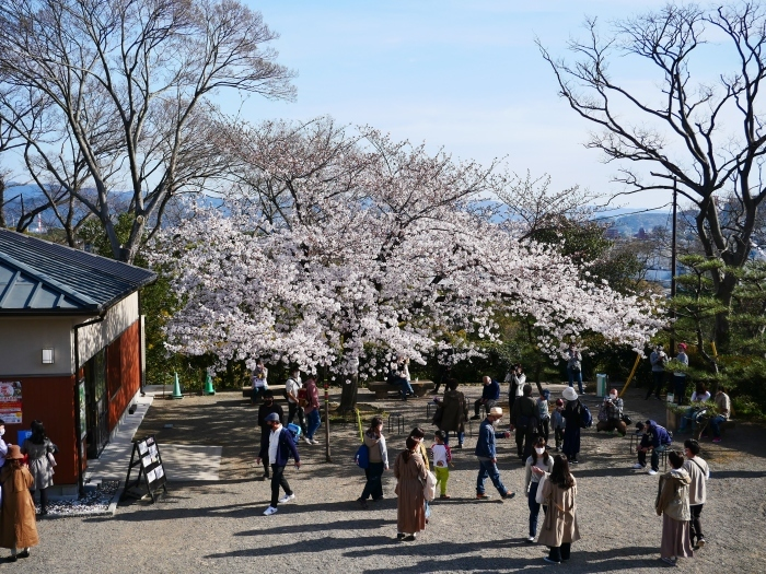 桜満開の和歌山城へ  2021-03-28 00:00 _b0093754_23263787.jpg