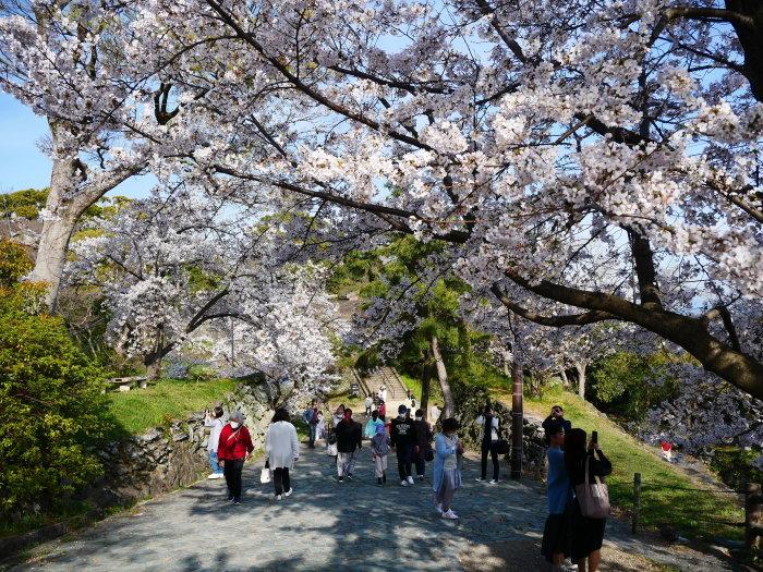 桜満開の和歌山城へ  2021-03-28 00:00 _b0093754_23271825.jpg