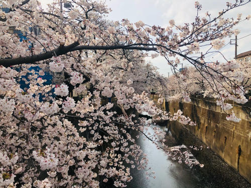 春うらら_a0279858_06350223.jpg