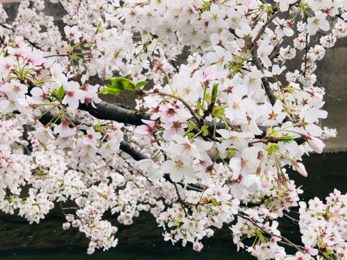 春うらら_a0279858_06505877.jpg