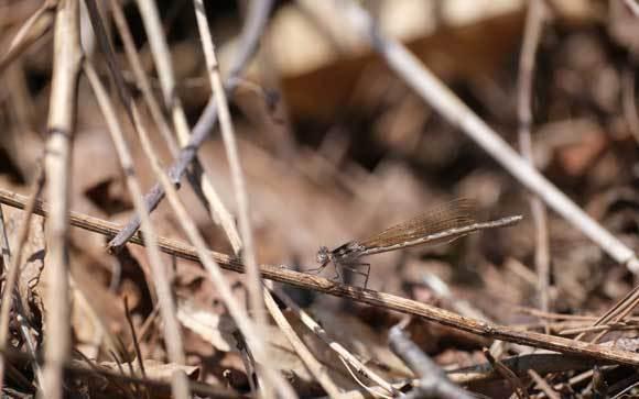 春、見つけた_e0220159_14114691.jpg