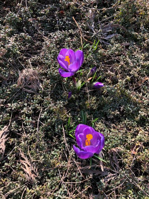 冬から春へ_b0093660_17353703.jpg