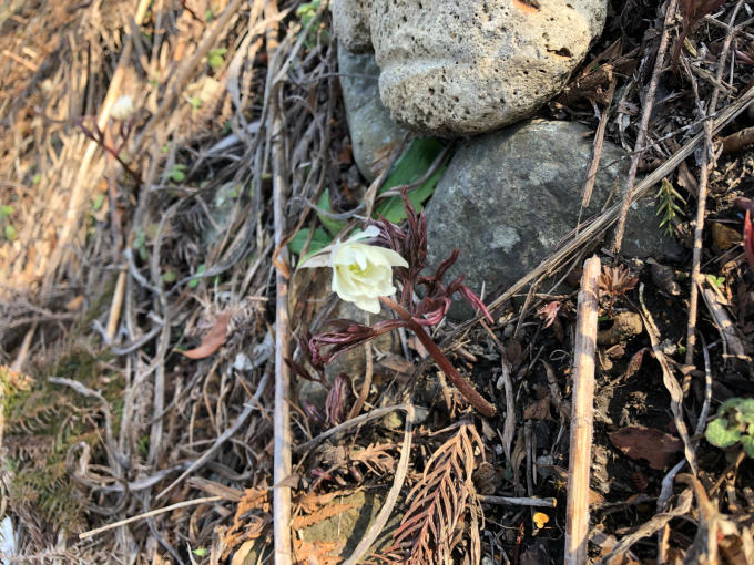 冬から春へ_b0093660_17354185.jpg