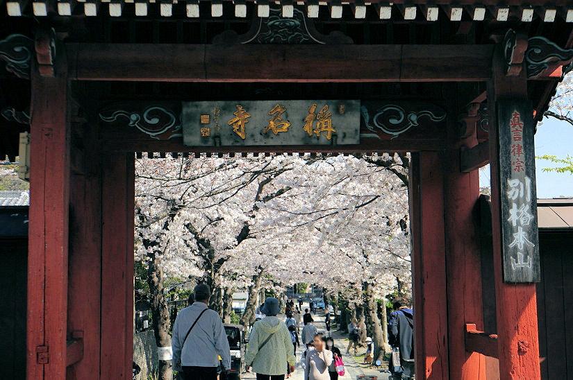 ★春爛漫、桜のトンネルになった参道、境内も桜満開、横浜/称名寺!_c0168984_15474867.jpg