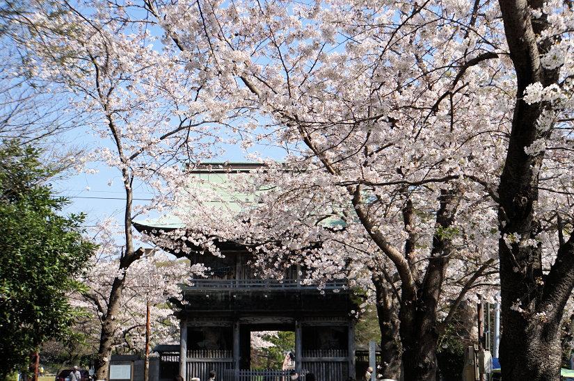 ★春爛漫、桜のトンネルになった参道、境内も桜満開、横浜/称名寺!_c0168984_15482742.jpg