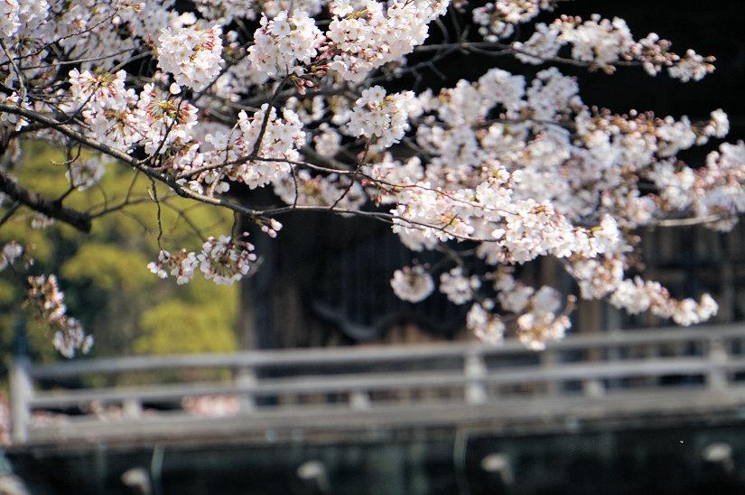 ★春爛漫、桜のトンネルになった参道、境内も桜満開、横浜/称名寺!_c0168984_15483901.jpg