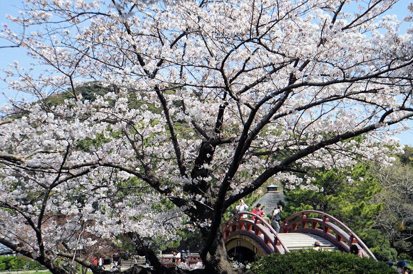★春爛漫、桜のトンネルになった参道、境内も桜満開、横浜/称名寺!_c0168984_15484904.jpg