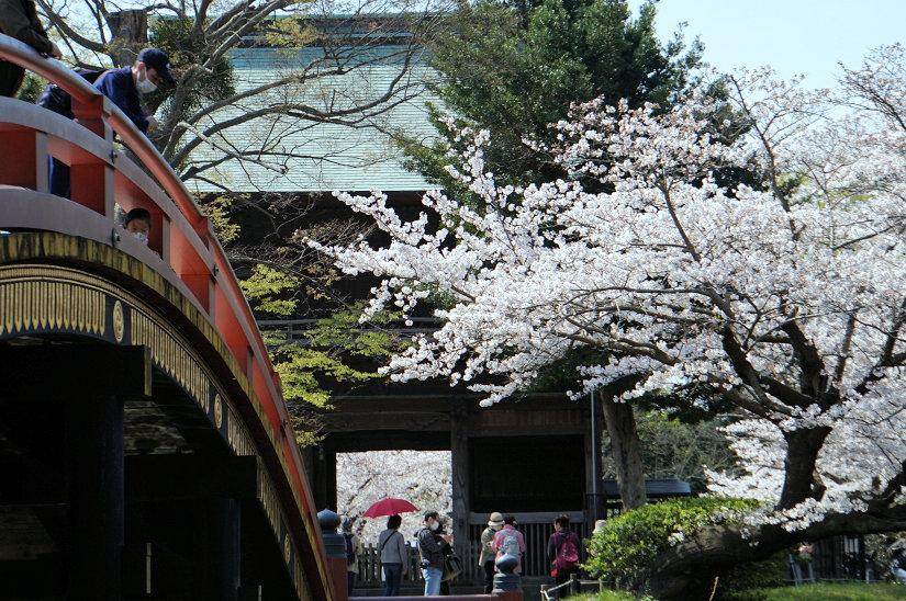 ★春爛漫、桜のトンネルになった参道、境内も桜満開、横浜/称名寺!_c0168984_15491592.jpg
