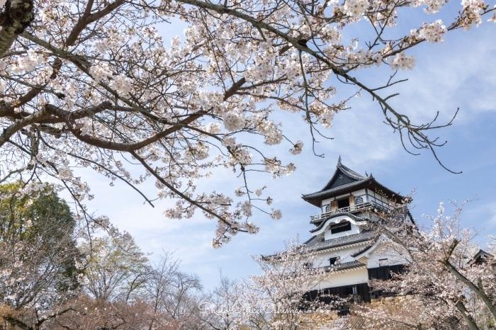 犬山城内の桜_f0361287_00063188.jpeg