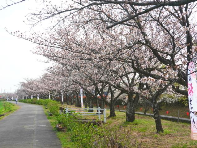 JR東海さわやかウォーキング 2021/3/27 in三河安城_d0130291_11535953.jpg