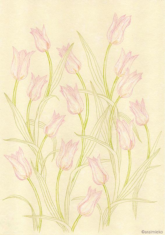 色鉛筆は、線を描くのが得意な画材だから_b0209395_10471584.jpg