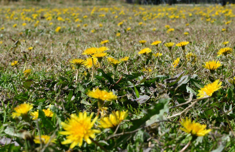 ■ ツバキは春がいい_d0334796_22094820.jpg