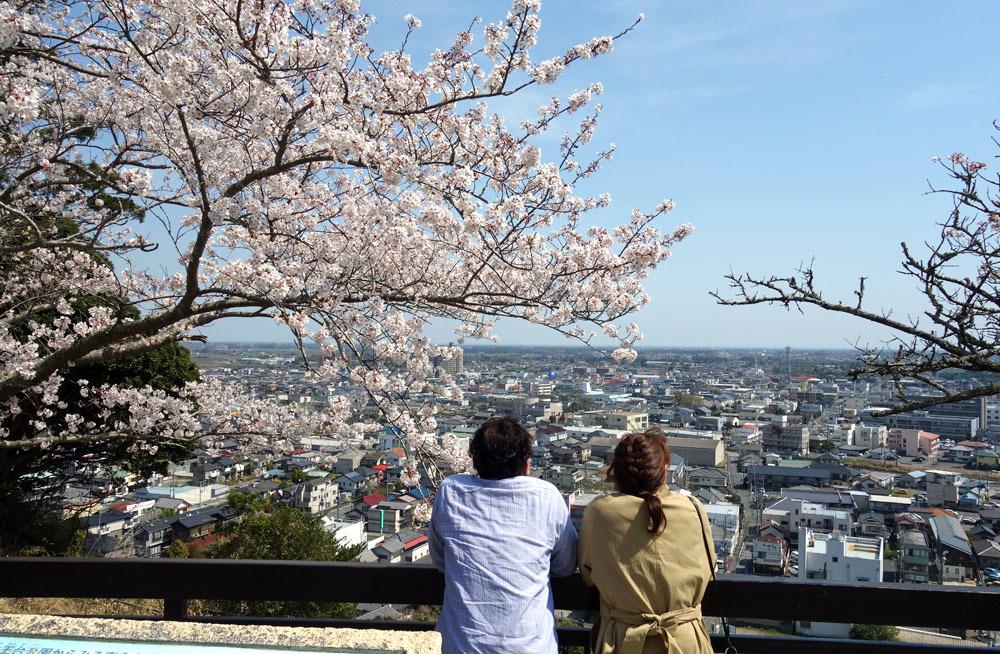 東金のサクラ満開 桜、さくら、サクラ_b0114798_16584887.jpg