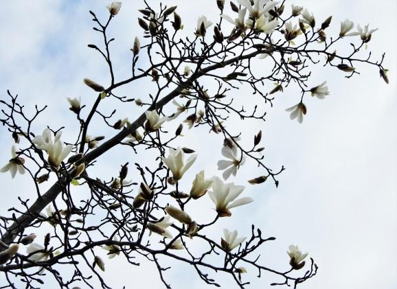 しろい影絵(ombres chinoises du blanc)_c0345705_15055919.jpg