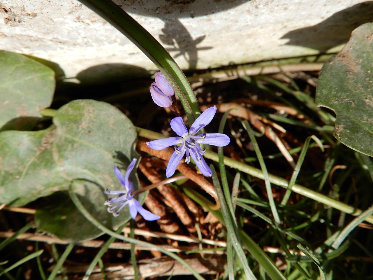春は進む_c0025115_22482661.jpg