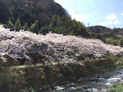 桜の季節に無情の雨が・・・_e0234016_19315035.jpg