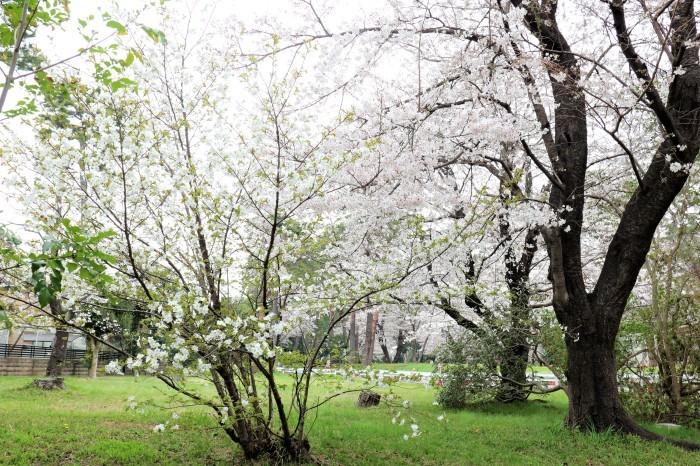 大宮公園に接した カフェ店_d0150720_11015252.jpg