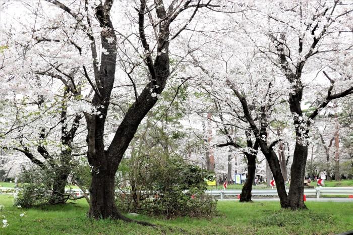 大宮公園に接した カフェ店_d0150720_11021565.jpg